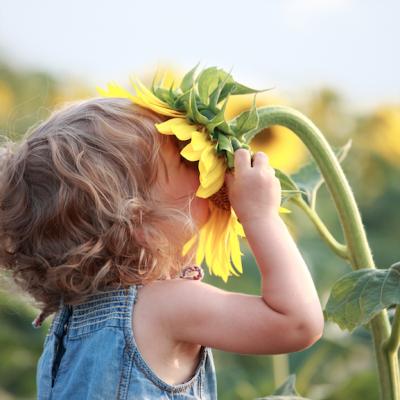 foto van een kindje met gezicht in zonnebloem