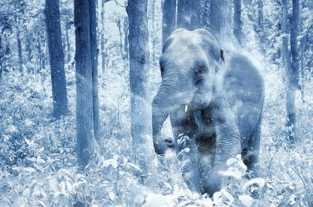 afbeelding van een olifant bij een blog over om de oren geslagen worden met wat je online allemaal fout doet